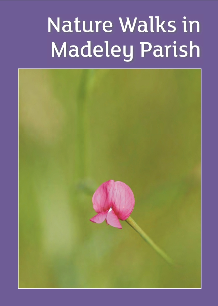 Madeley Nature Walks